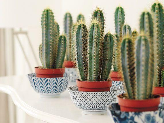 Cactus: a falta de agua, mucha belleza