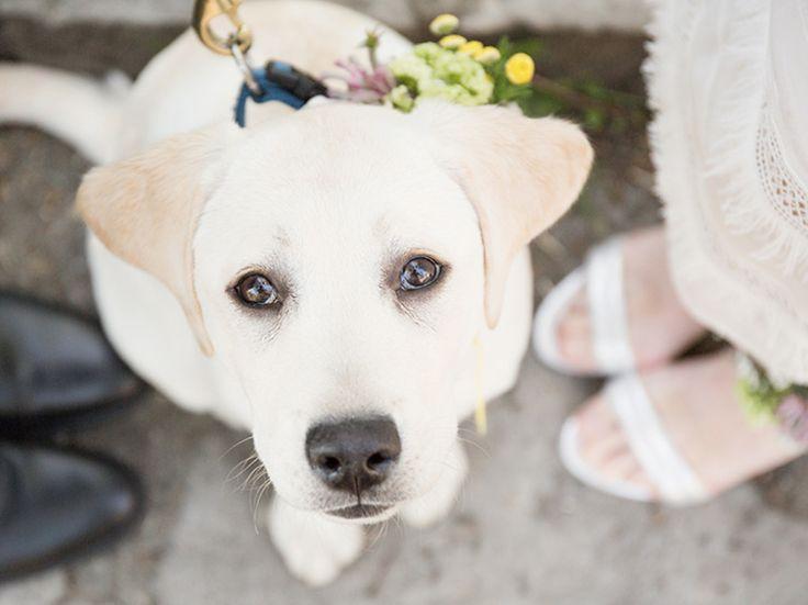 DIY-Anleitung: Blumengesteck für Braut, Bräutigam und Hund selber machen via DaWanda.com