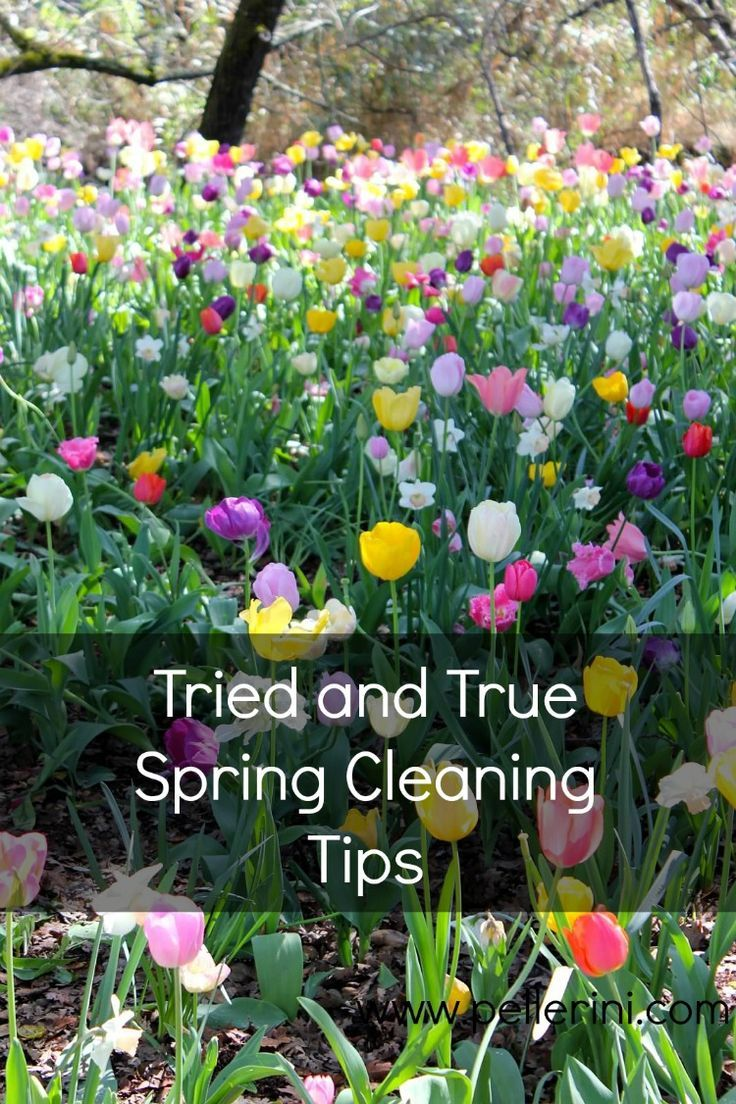 It's That Time of the Year: Spring Cleaning!