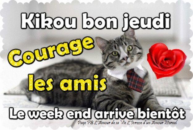 Kikou bon jeudi, courage les amis, le week end arrive bientôt #jeudi chat cravate bon jeudi bientot le week end