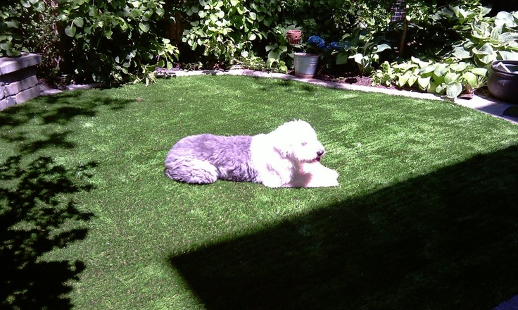 SYNLawn artificial grass dog and pet installations
