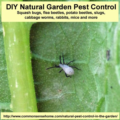 diy natural garden pest control fight squash bugs flea beetles potato beetles. beautiful ideas. Home Design Ideas