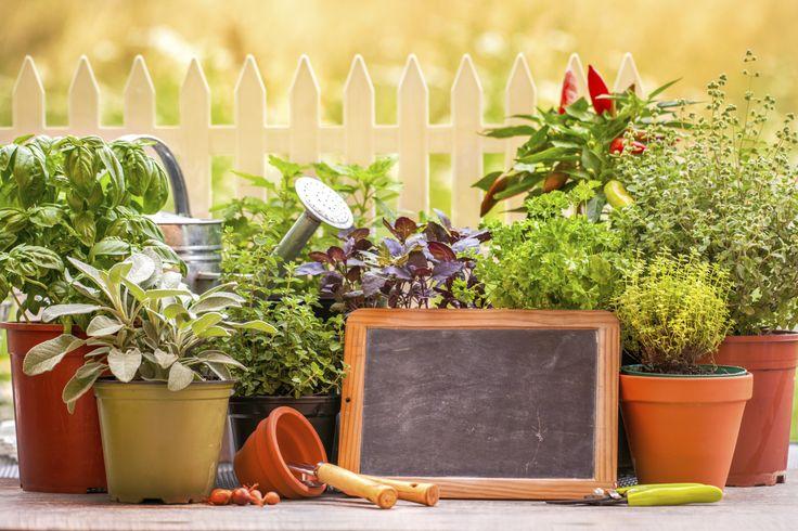 Diez plantas protectoras del hogar | eHow en Español