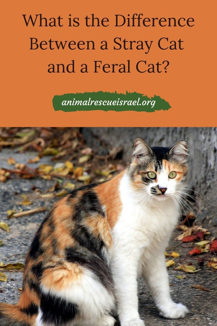 There Are A Few Different Words We Tend To Use To Describe Cats We See Outdoors Stray Feral Community Street And Free Roaming Let Feral Cats Cats Sick Cat