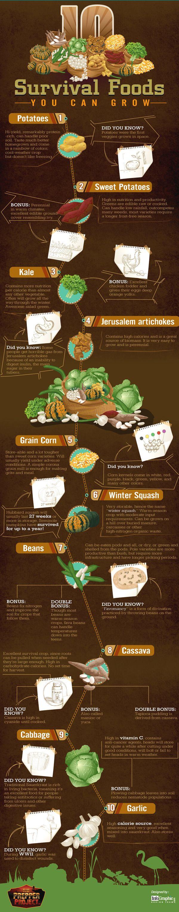 10 Survival Foods
