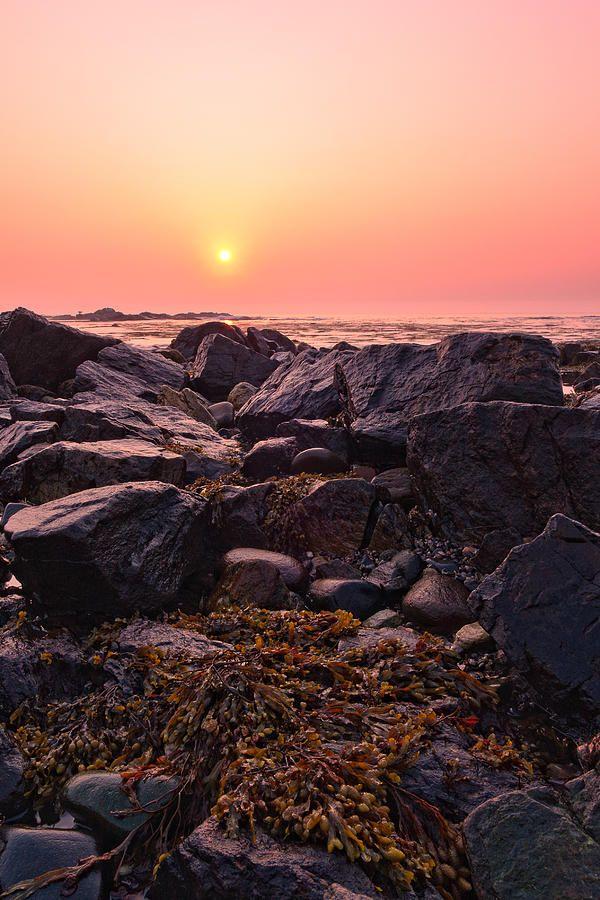 ✯ Rocks And Seaweed Sunrise