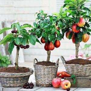Не обязательно иметь сад…