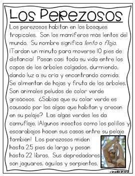Rainforest Animals- Spanish/ Animales del Bosque Tropical