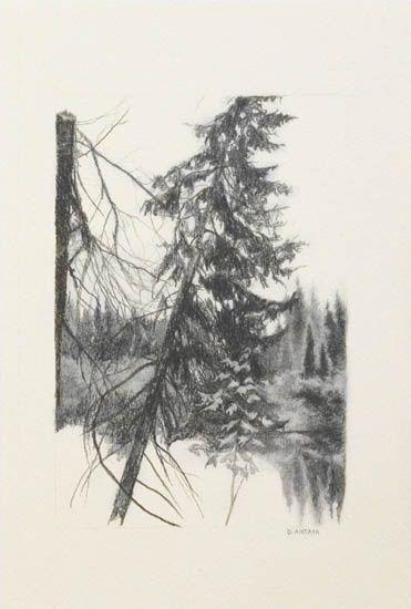 "Denise Antaya - Wild North 4"" x 6"" Graphite on Arches"