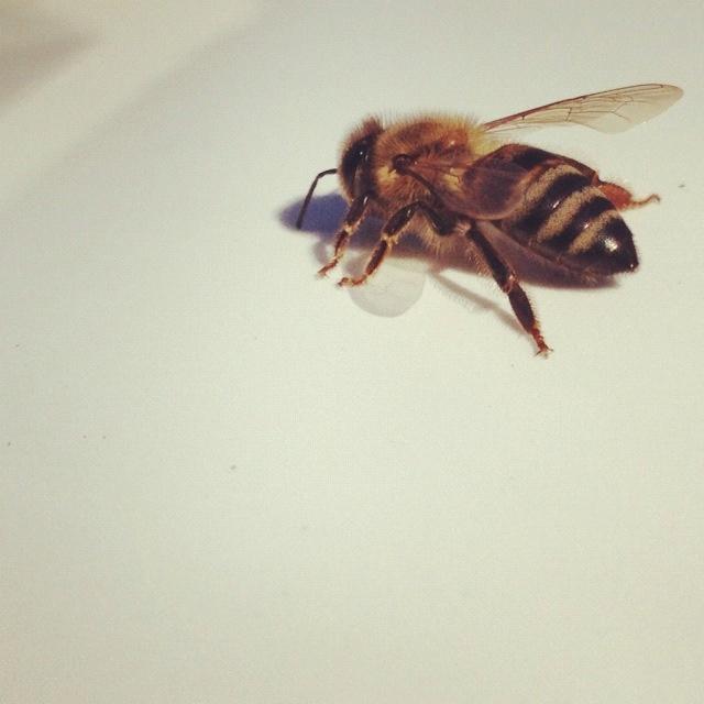 A bee on my bonnet. ;)