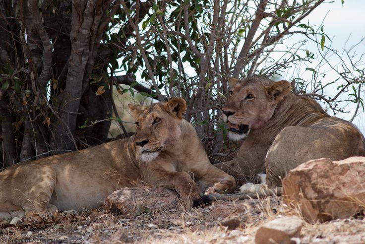 Safari a Tsavo est fine luglio 2013