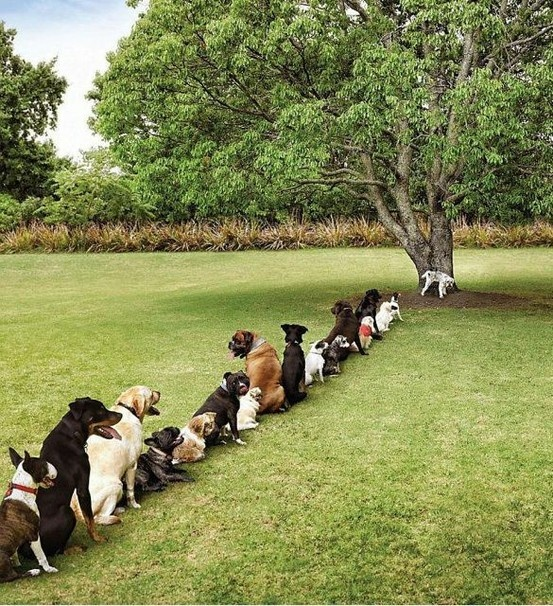 Haha...what it might look like if dogs had to wait in line to go to the bathroom at the park.