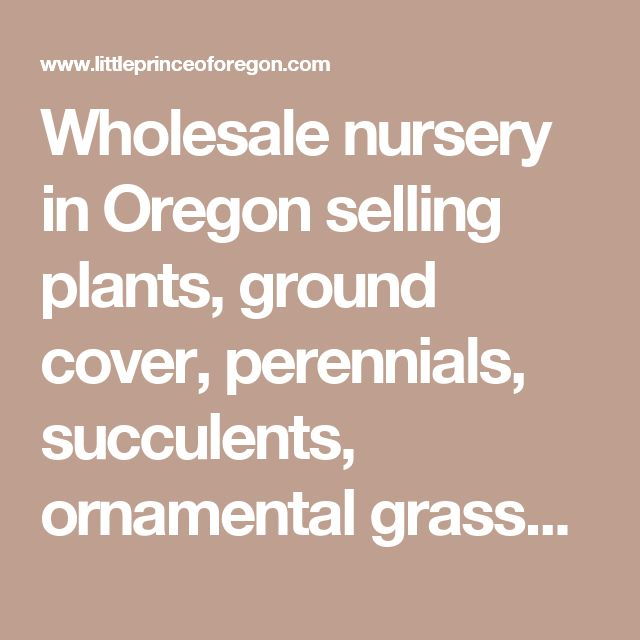 Whole Nursery In Oregon Ing Plants Ground Cover Perennials Succulents Ornamental Gres