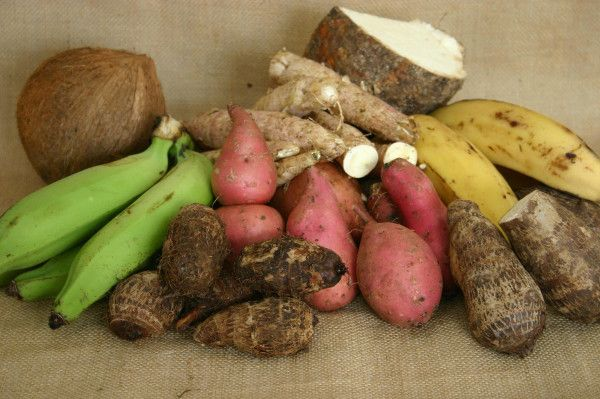 These are some favourite Jamaican foods that I grew eating: Coconut, green plantain, coco, sweet potato, cassava, yellow yam and ripe plantain. Missing is Ackee and Cod Fish.