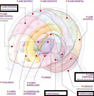 Comment fonctionne la mémoire