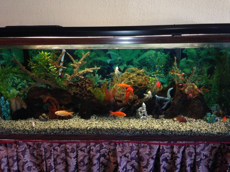 17 best images about aquariums on pinterest silk plants Beautiful aquariums for home
