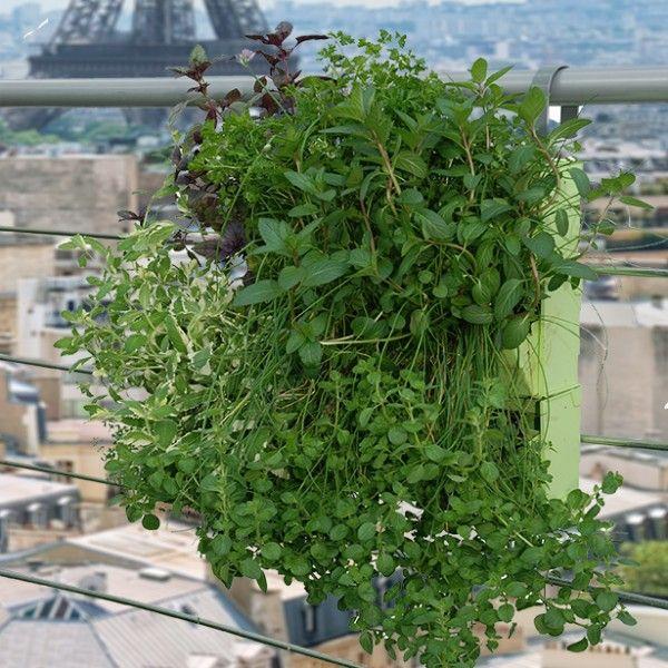 Mur v g tal brique verte vert v g talis sur balcon x1 for Mur vegetal interieur