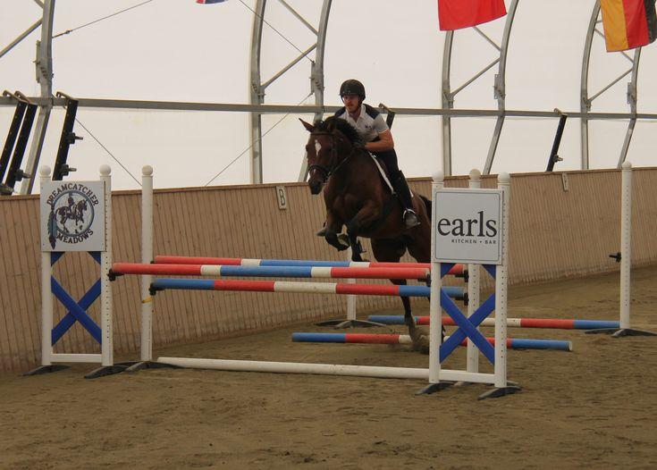 LITIGATOR DMV, 2010, German Hannoverian. #equestrian #dressage #hannoverians