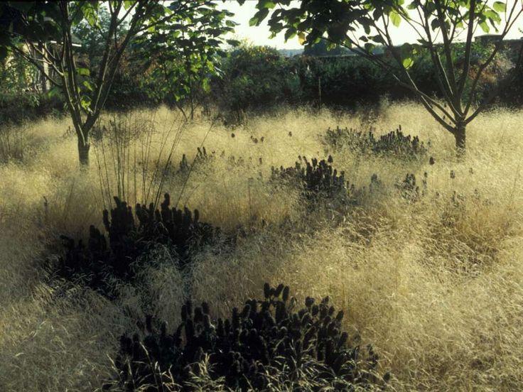 43 best piet oudolf images on pinterest landscaping for Kingsbury garden designs