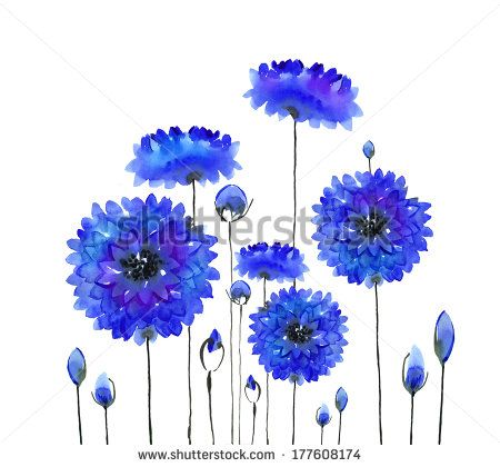 watercolor cornflowers