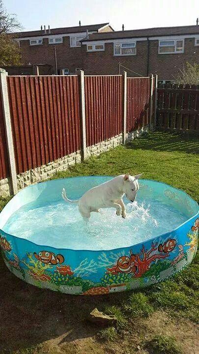 En ja, wij moeten een zwembad hebben. Anders draaien wij met veul plezier de keukenkraan open!!!!!