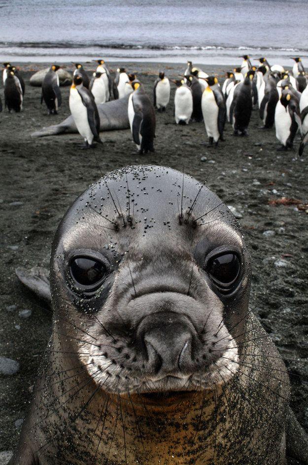 Você já viu uma foca tirar uma selfie assim? E com as sobrancelhas tão perfeitas?