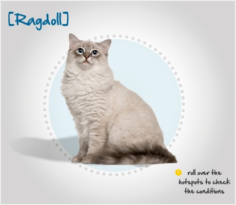 Did you know the Ragdoll is a large, mellow cat breed whose name comes from its tendency to go limp and relaxed when picked up? Read more about this breed by visiting Petplan pet insurance's Condition Checker!: Cats Rules, Cat Rules, Kitty Cat, Pet, Mellow Cat, Cat Domestic, Cat Breeds, Domestic Cat S, Cat Lady