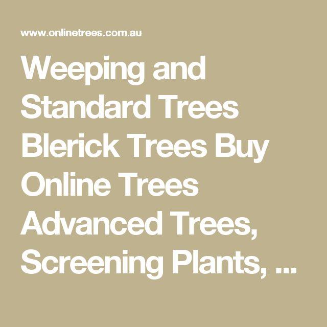 Weeping and Standard Trees Blerick Trees Buy Online Trees Advanced Trees, Screening Plants, Fruit Trees