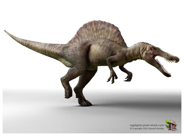 Mejores 26 imágenes de DINOSAURS en Pinterest | Dinosaurios, Parque ...