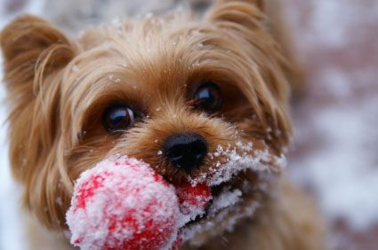 Pets love the snow! make sure your ice melter is a pet-friendly brand....