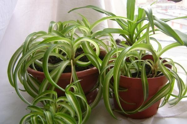 12 Houseplants That Clean The Air and Are Almost Impossible to Kill | DiyProjects.Tips