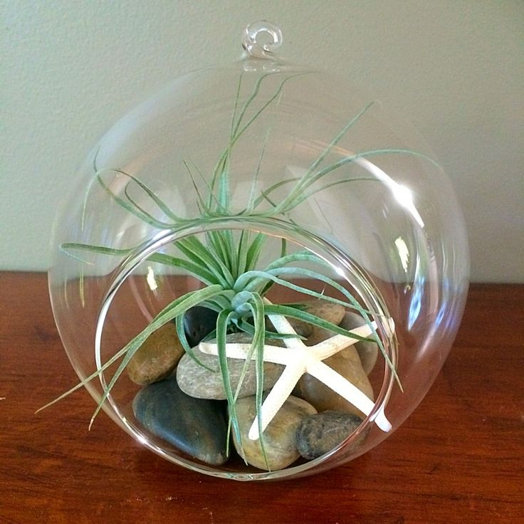 Large Hanging Glass Garden with Cotton Candy and Riverstones #airplants #hanginggarden #airplantdesigns