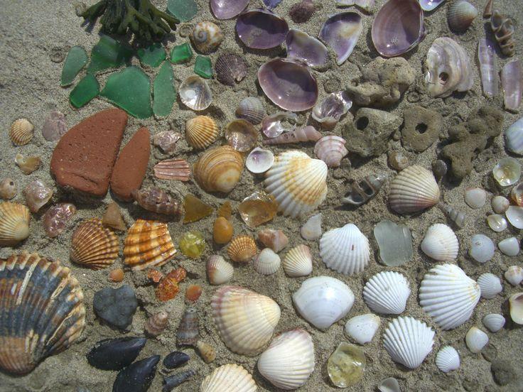 Strandfarben entdecken Strandschätze sammeln, sortieren, etc.