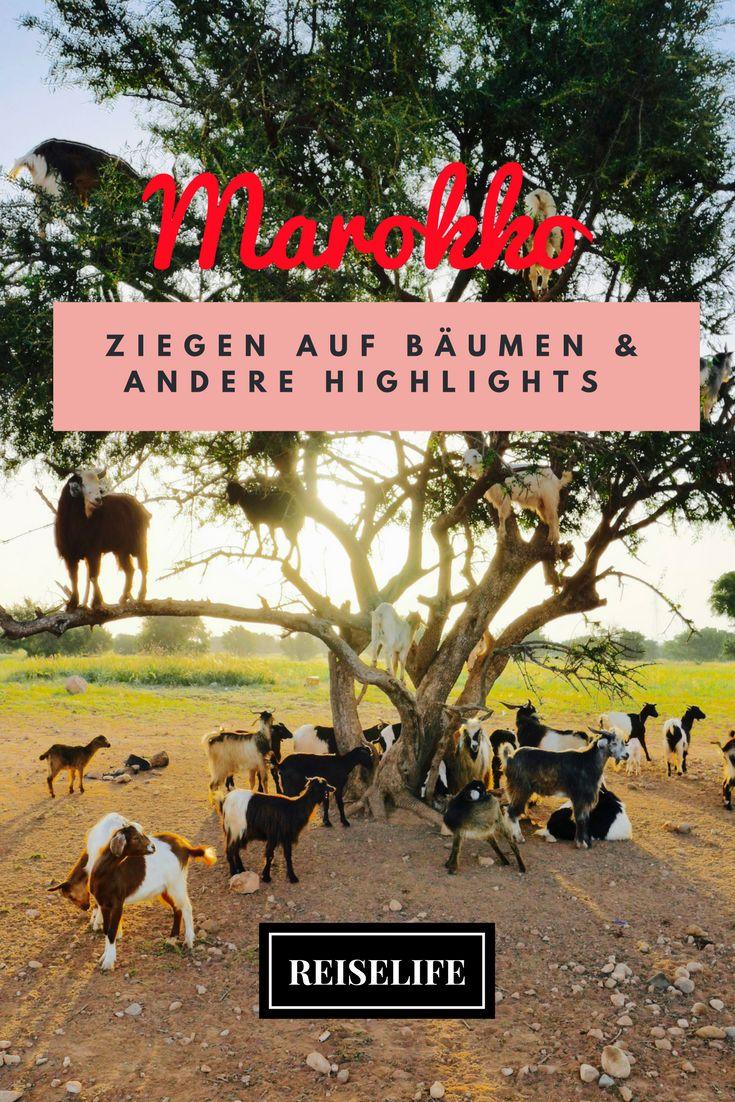 Lass dich inspirieren von Sehenswürdigkeiten, Aktivitäten oder landschaftlichen Highlights auf deiner Marokko Rundreise! Von der heiligen Stadt Moulay Idriss bis zu Ziegen in Bäumen...es ist für jeden etwas dabei!