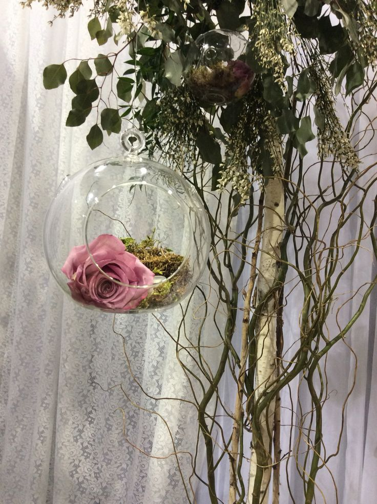 Our hanging glass bubbles with moss and a beautiful rose