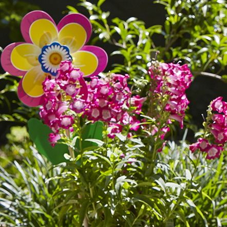 Fiore in the garden in a pot plant looking happy basking in the sunshine! #whirlywindmills #colour #flower #garden