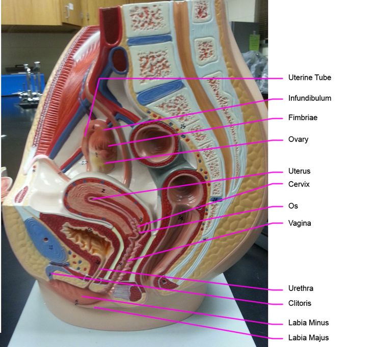 79 best 3 Human Anatomy and Physiology II 1248 Exam III material ...