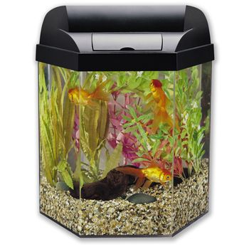 Marineland eclipse hex 5 fully integrated aquarium kit 39 for Eclipse fish tank
