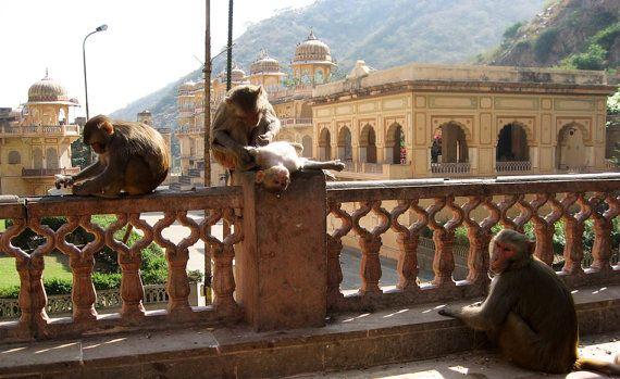 Hanuman Temple Jaipur Rajasthan India 8X10 Print chamelagiri.etsy.com