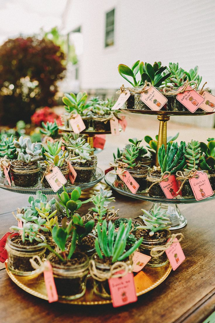 Succulent escort cards- love the trays they are on