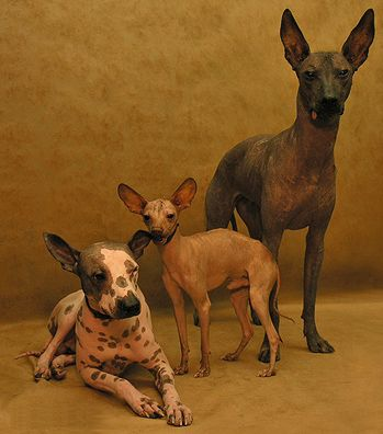 Best breed in the world! Definitely not for everyone though.  All three sizes shown.