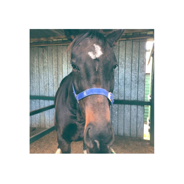 My beautiful boy Kahn great ride on him yesterday love him❤️❤️❤️❤️❤️❤️