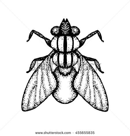 #Vector #image of #fly. Hand drawn by ink, black and white color. #pointillism