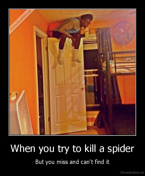 when you try to kill a spider but miss and cant find it - Google Search