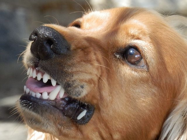 Aggression is a natural behavior in canids, especially in wild animals, but is generally unnecessary and even dangerous in domesticated dogs. Unfortunately, most dog owners don't recognize the early signs of aggression. In fact, most professional dog trainers don't get …