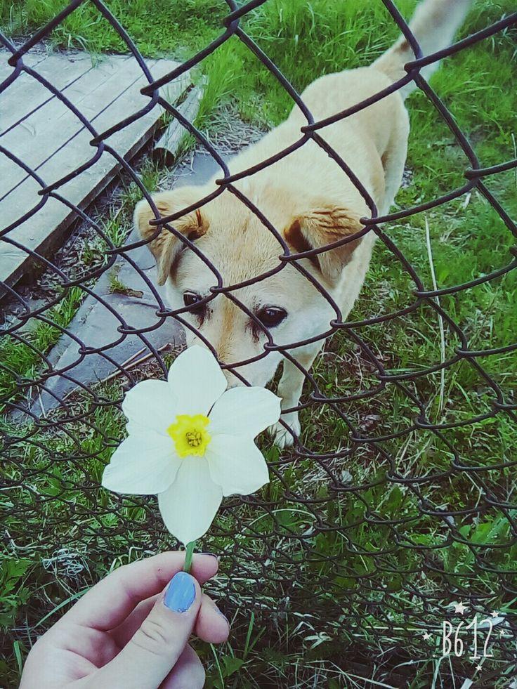 #собака #друг #другчеловека #животные #прогулка #цветы #цветок #нарцисс #свобода #мысли