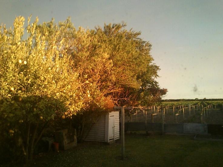 Natural colour clash! love it Gisborne, NZ