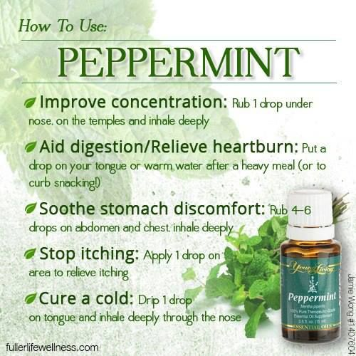 Young Living Peppermint oil. Anybody interested in purchasing the oils or learning more can email me at info@allaboutumassage.ca Or follow us on FB: www.facebook.com/allaboutumassage Distributor: All About U Massage #1368262