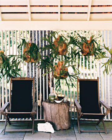 This covered terrace off the kitchen, which is an ideal spot for breakfast, is furnished with folding teak plantation chairs made in India around 1900 and a group of staghorn ferns; the tree stump was rolled home from the banks of the Connecticut River, where it was found.
