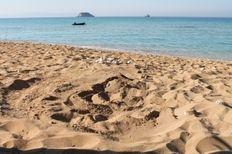 Sea turtle nest on Avithos, Kefalonia  | check it out at wildlifesense.com